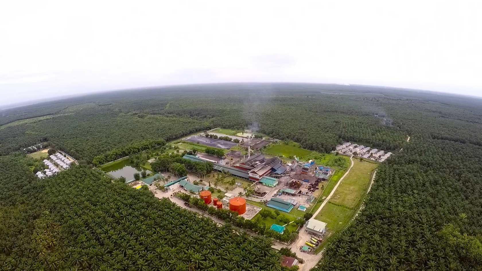 Vue aérienne de l'usine d'huile de palme Perkenunan Milano appartenant à Wilmar International